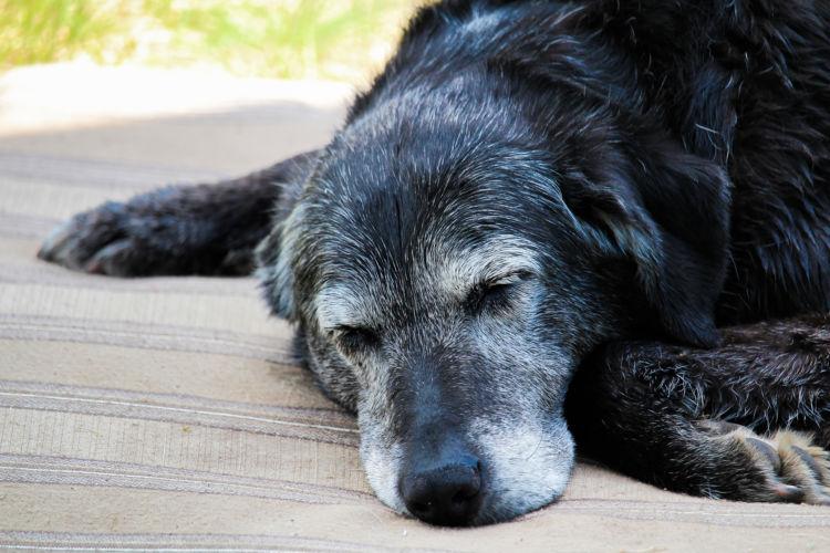 【老犬の寝たきり】対応と対処法③「食べない」