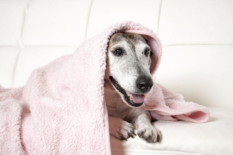 【老犬の寝たきり】対応と対処法④「お風呂・トイレ」