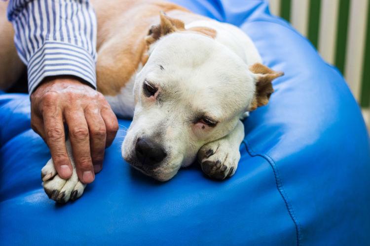 【老犬の寝たきり】介護の注意点とポイント