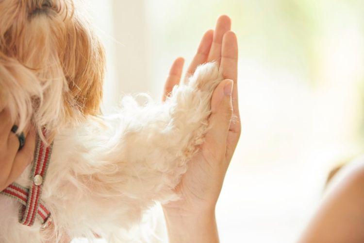 老犬の認知症対策③【マッサージ】