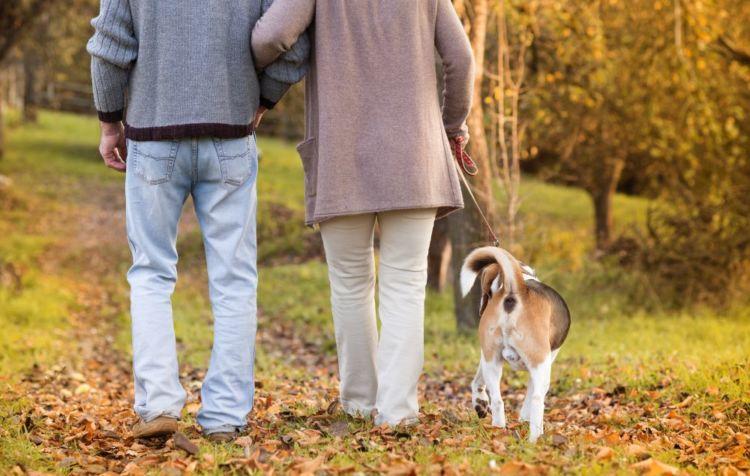 老犬 散歩 時間 距離