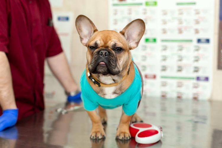 老犬 散歩 動物病院 診察