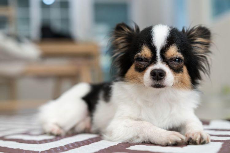 老犬のベッド注意点②【おもらし対策】