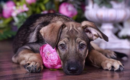 本当に必要なの?飼い主が知っておくべき犬のワクチンの種類と選び方