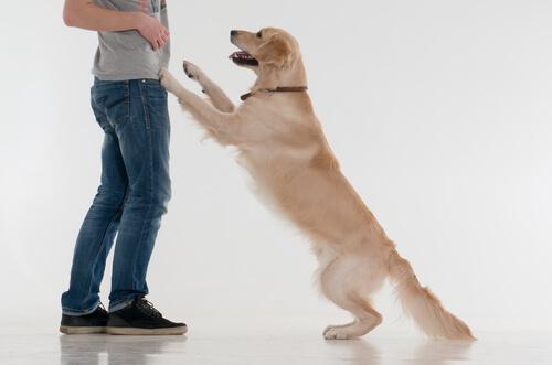 あなたのこと見下してる!?愛犬のマウンティングを上手にやめさせる方法