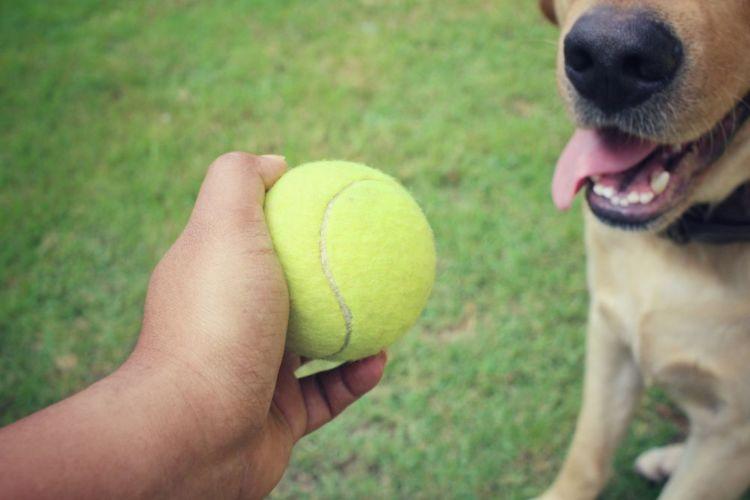 ラブラドール・レトリバー ボール おもちゃ
