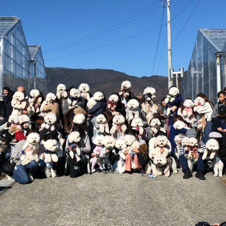 愛犬とのオフ会で利用するグループも(中島農園)