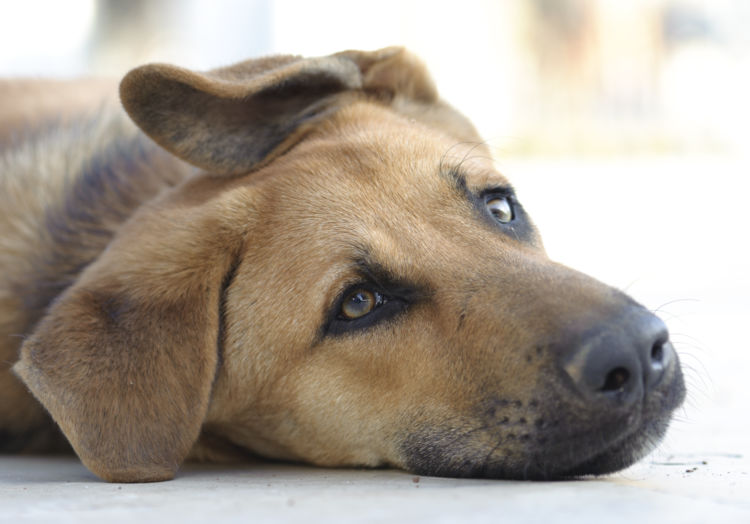 にんにくを誤食した場合の応急処置と対処法④【動物病院に犬の今の状態を伝える】