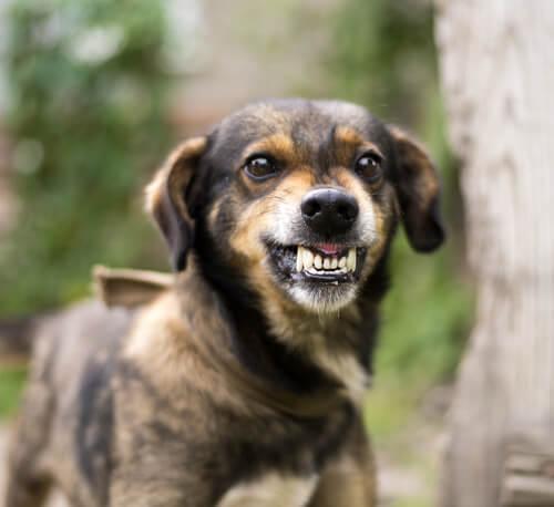 犬が目で何かを訴えている?犬があなたをじっと見つめる、3つの理由