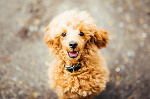 犬が震える理由は寒さだけ?嘔吐や下痢など、犬の不調の理由は?