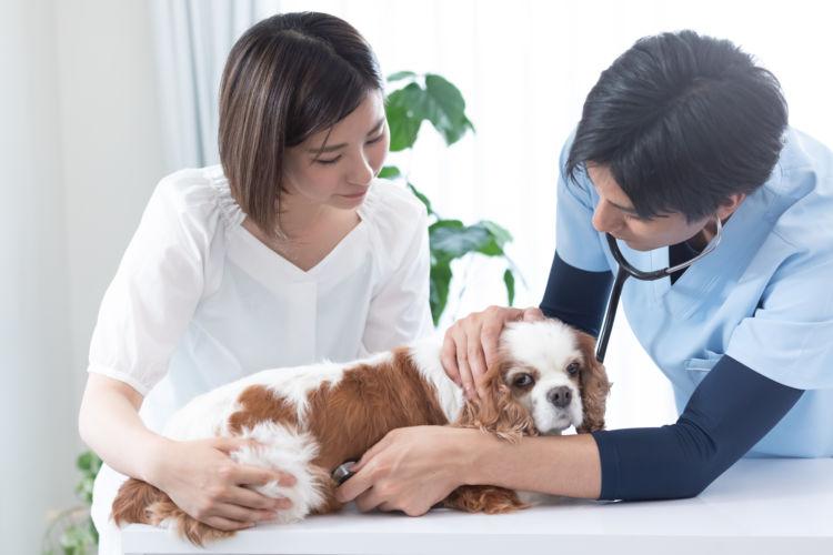 犬が「アボカド」を誤食した場合の治療法や治療費は?