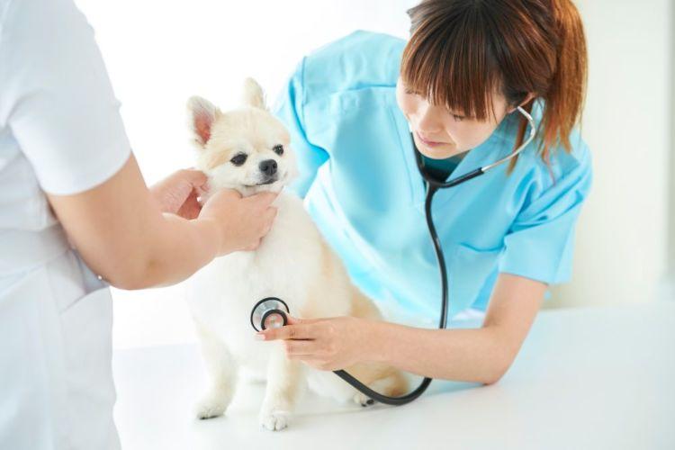 犬が「いちじく」を誤食した場合の治療法や治療費は?