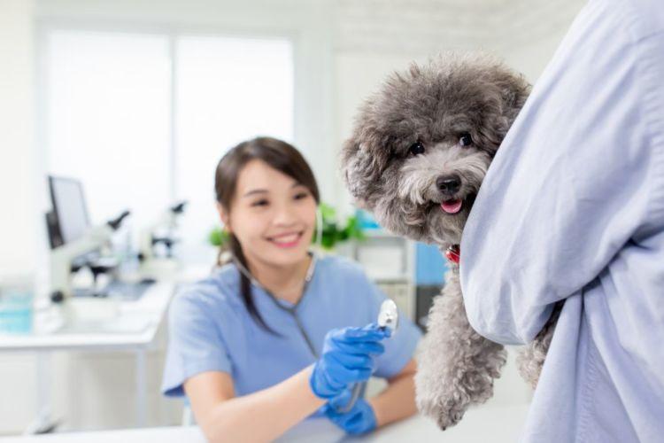 犬 いちじく 受診 動物病院 獣医師
