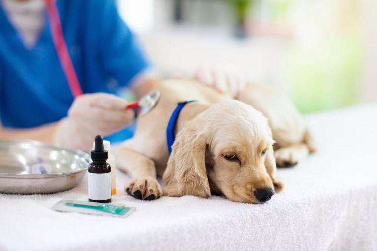 キシリトールを誤食した場合の応急処置と対処法⑤【応急処置は獣医師の指示に従う】