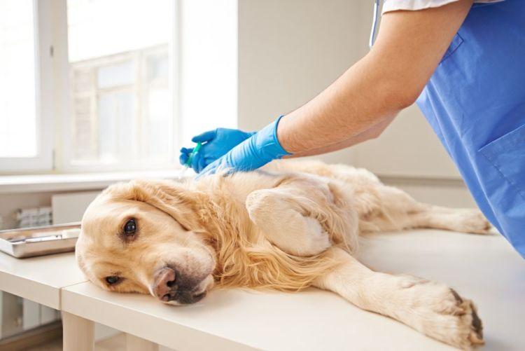 犬が「キシリトール」を誤食した場合の治療法や治療費は?