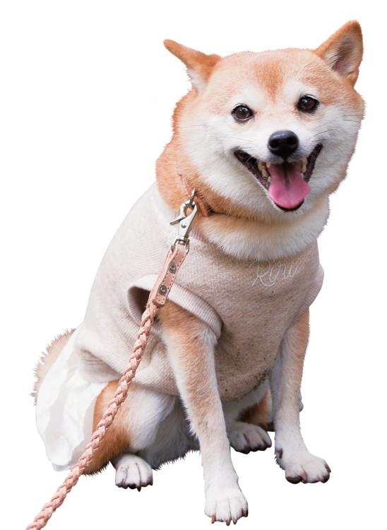 犬たちのホンネ3