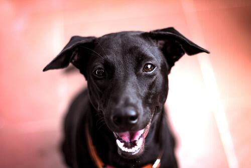 口輪(くちわ)じゃかみ癖は直せない!?愛犬に口輪をさせる効果について調べてみた