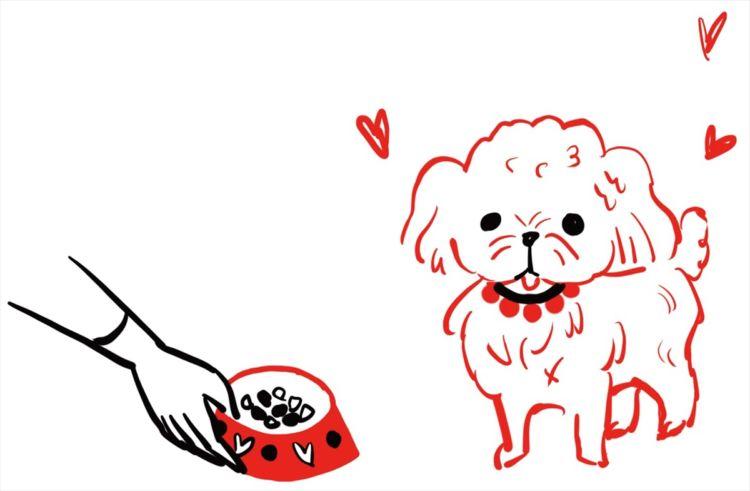 犬にはダイエットなんて関係ないもんね~♪