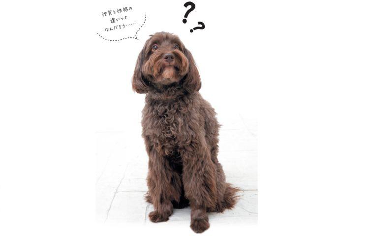犬のルーツ、性質と性格を知ることが鍵なのです