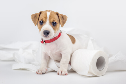 引っ越しが原因!?環境変化による犬のトイレ失敗、3つの改善策