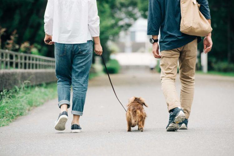 【老犬の散歩】時間や距離は?