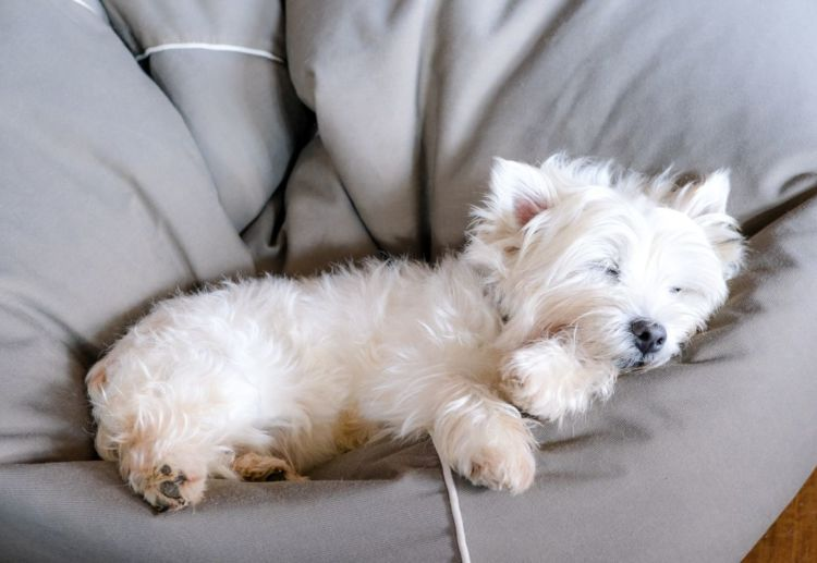 【老犬のベッド】選び方やポイント注意点は?
