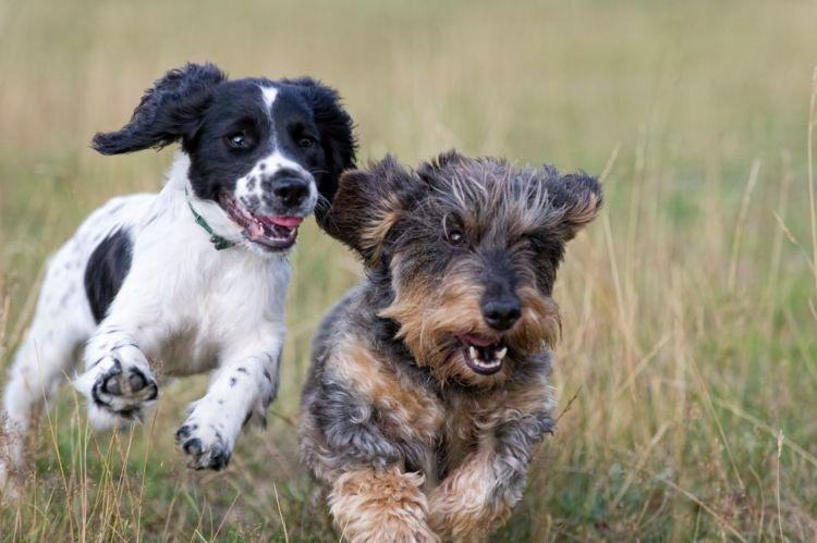 犬の【老衰】予防・回復方法は?