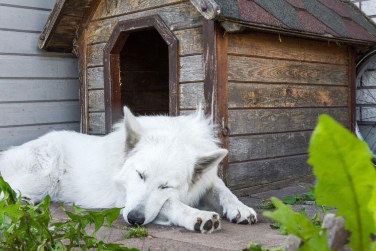 老犬の最期の症状「ケース③」【外飼い】