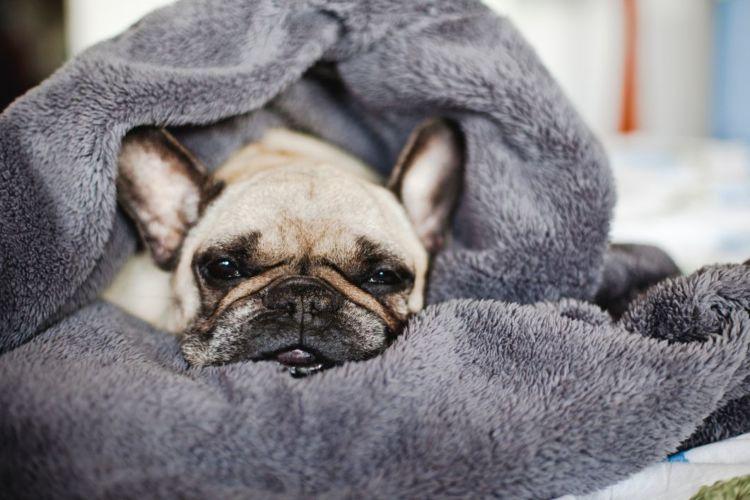 【老犬のベッド】寝たきりになった場合の注意点!