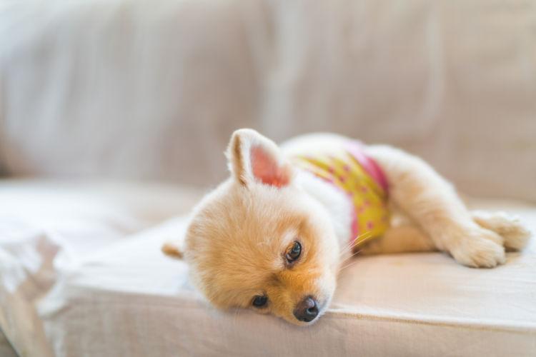 犬の「薬」の誤飲【症状は?】