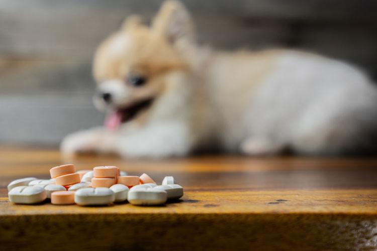 犬の薬の誤飲②【プソイドエフェドリンを含む鼻炎薬】