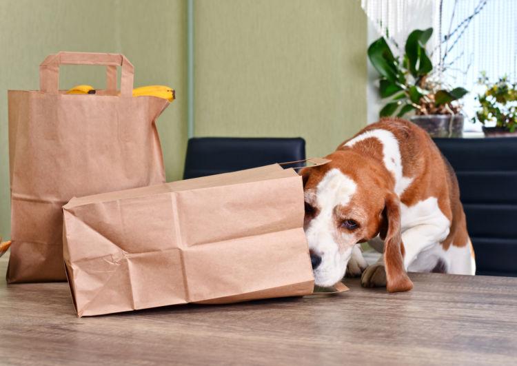 犬の「薬」の誤飲、誤飲しやすい物