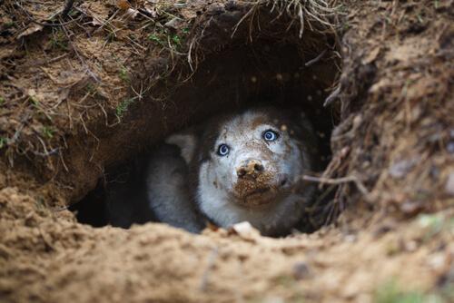 なぜ、犬はソファーで穴を掘るしぐさをするのか