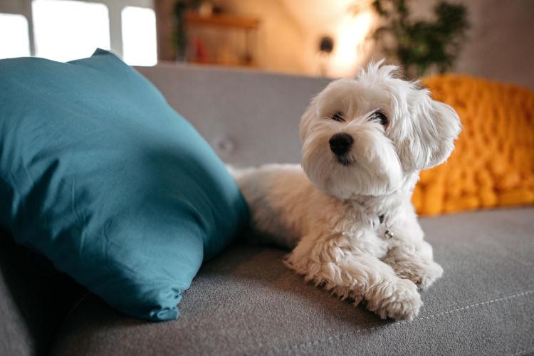 フィラリア予防【室内犬】