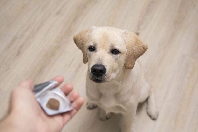 犬のフィラリア予防薬「種類・回数は?」①【内服薬(飲み薬)】