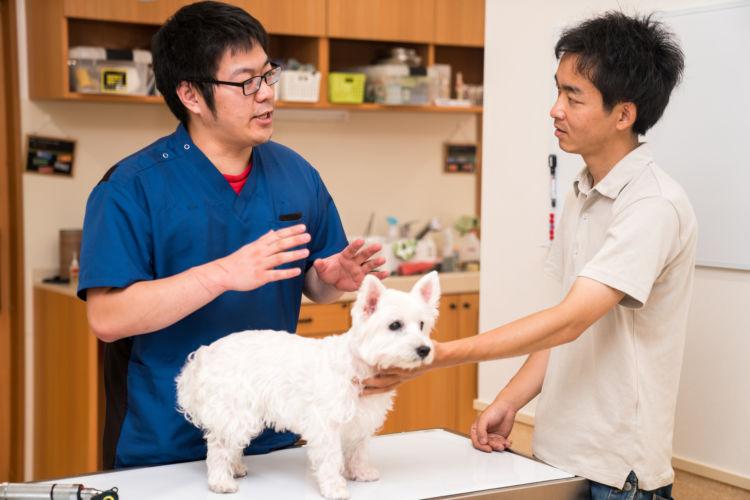 犬 フィラリア 予防薬 値段 動物病院