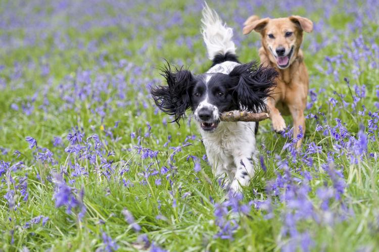 犬のフィラリア予防薬【まとめ】