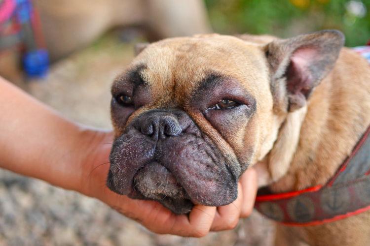 犬 アトピー性皮膚炎 痒み