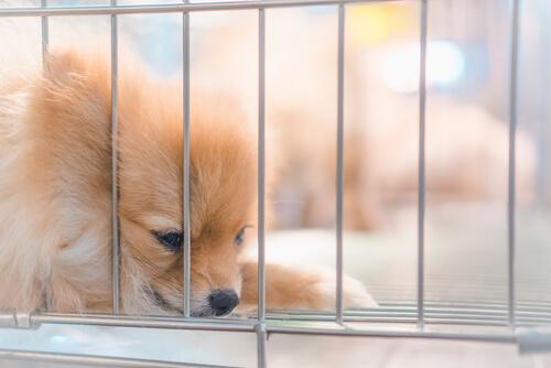 ケージを上手に活用して犬が過ごしやすい環境をつくる!今すぐ実践できる工夫術