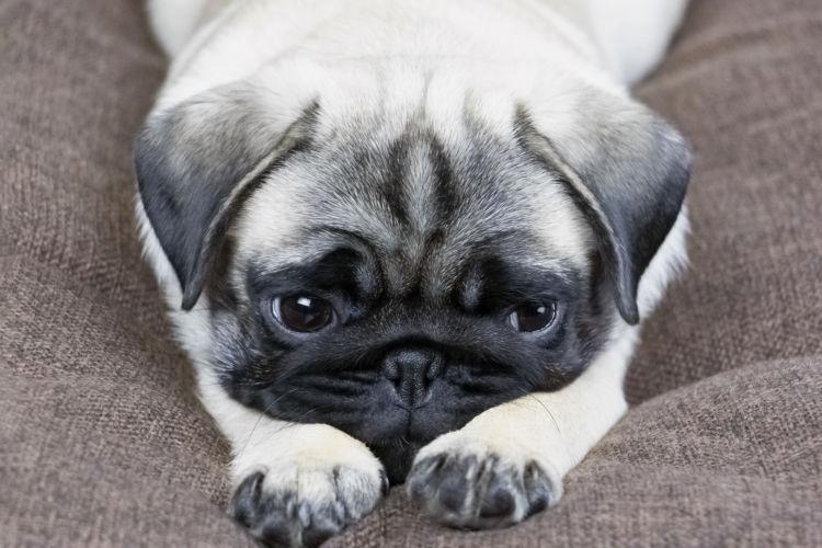 犬 嘔吐 胃腸の病気