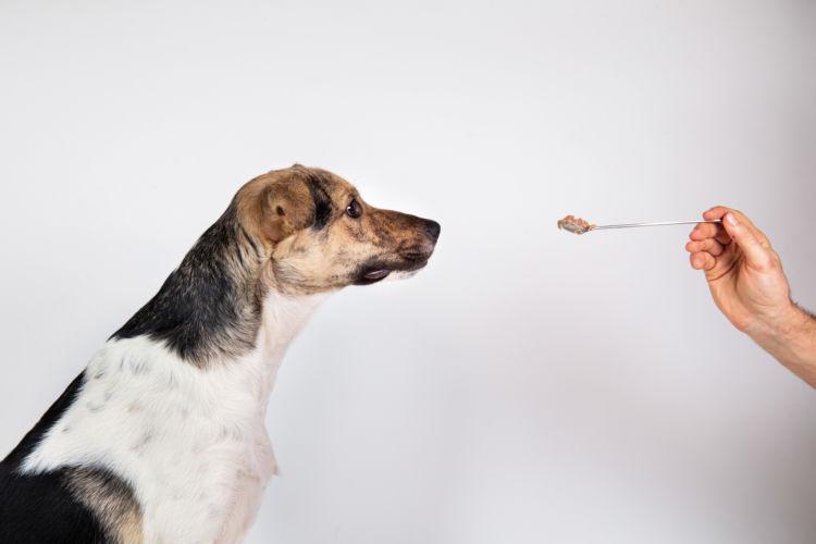 犬の吐き気止めの与え方や飲ませ方は?