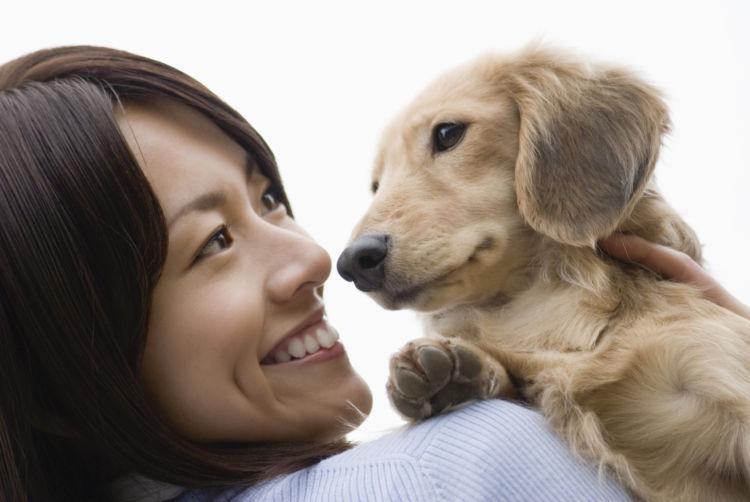 犬の嘔吐薬「まとめ」