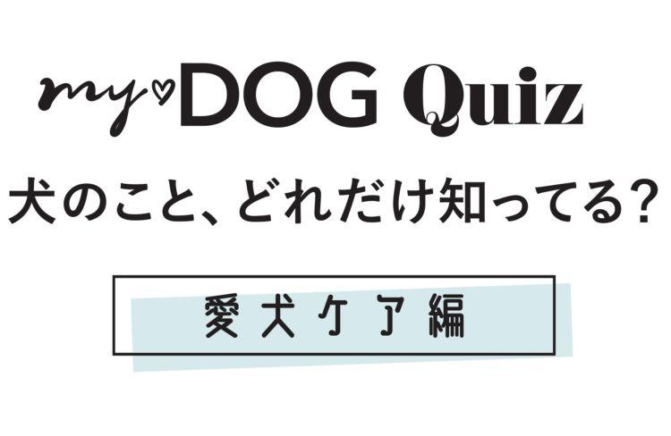 【my♡DOG Quiz 犬のこと、どれだけ知ってる?】愛犬ケア編