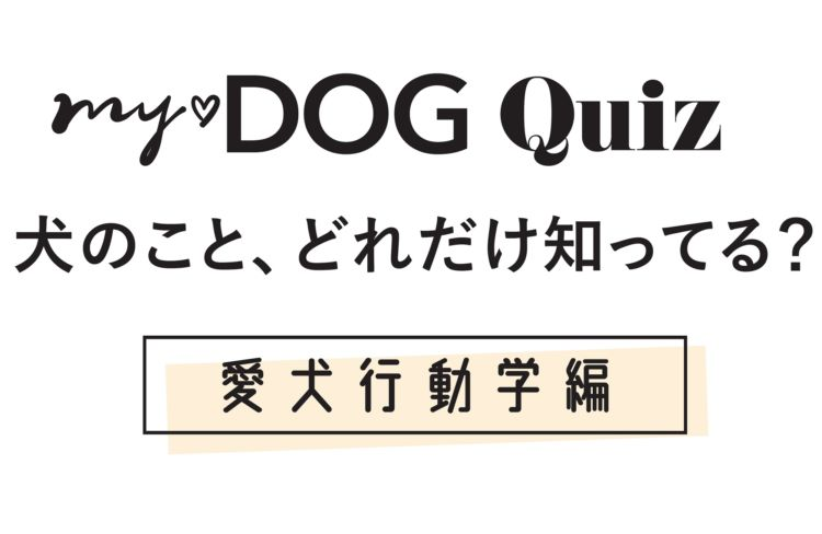 【my♡DOG Quiz 犬のこと、どれだけ知ってる?】愛犬行動学編