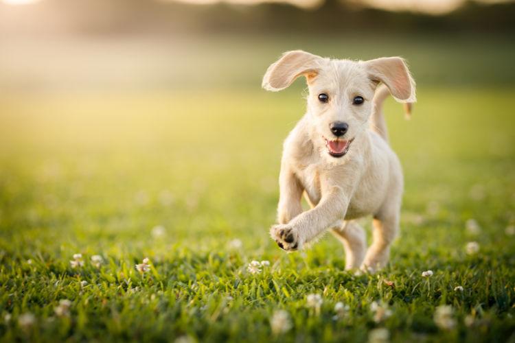 犬 下痢 どれくらいで治るの?