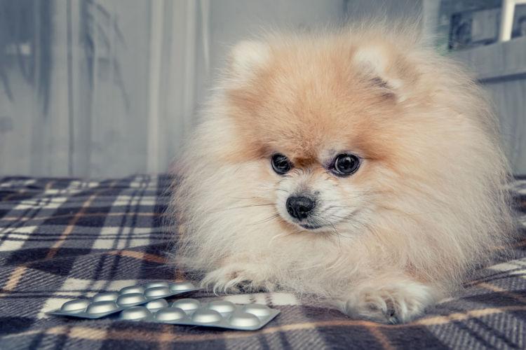 犬 下痢 その他の薬