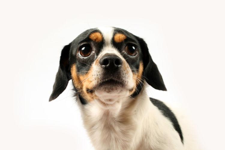 犬の下痢止め、副作用は?