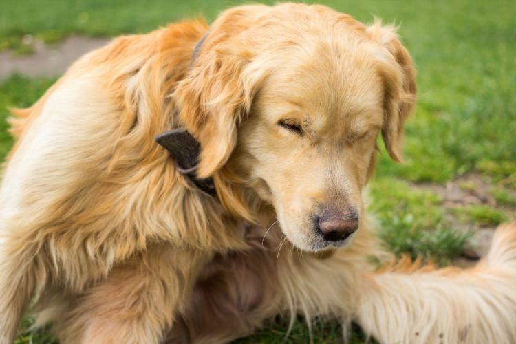 犬のアレルギー【種類や原因、症状は?】