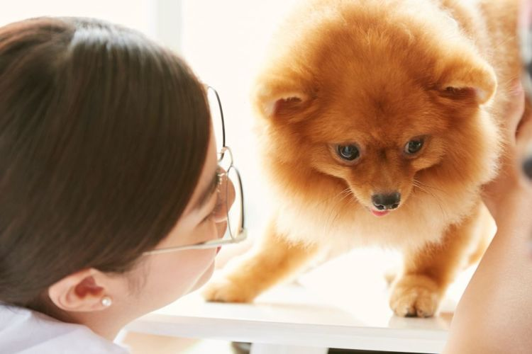 犬の「薬」の誤飲【治療法や治療費は?】