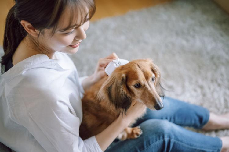 【ポイントは、骨格を意識すること!】愛犬が怖がらない抱っこにチャレンジ!